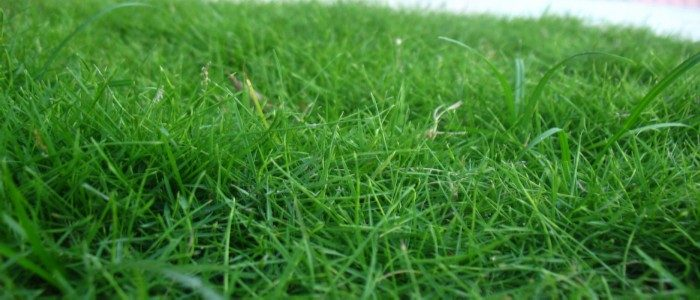 How Long Does Grass Seed Take to Fully Grow