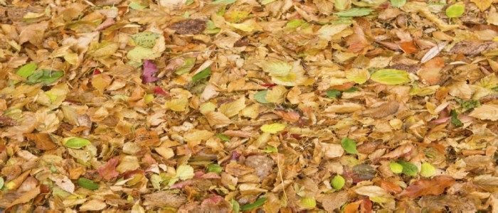 Why is Leaf Litter Important