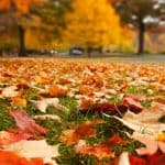 Lawn And Garden Fall Maintenance