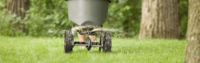 Should You Fertilize Your Lawn in the Spring
