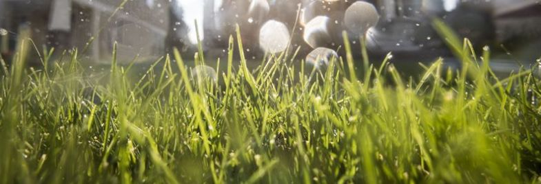 How to Water a Lawn During a Heat Wave