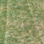 Is Starter Fertilizer Good For Established Lawns