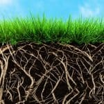 How to Stimulate Root Growth in Grass