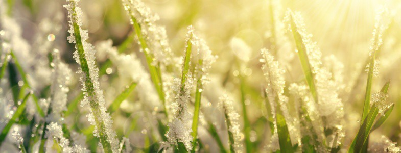 When Should You Apply a Winter Fertilizer to Grass