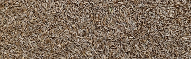 Difference Between Annual And Perennial Grass Seeds