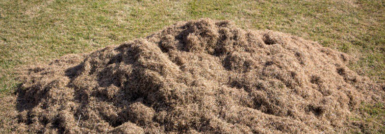 Is Old Dead Brown Grass or Thatch a Nitrogen Source for Compost