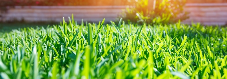 What Does Humic Acid Do For Grass