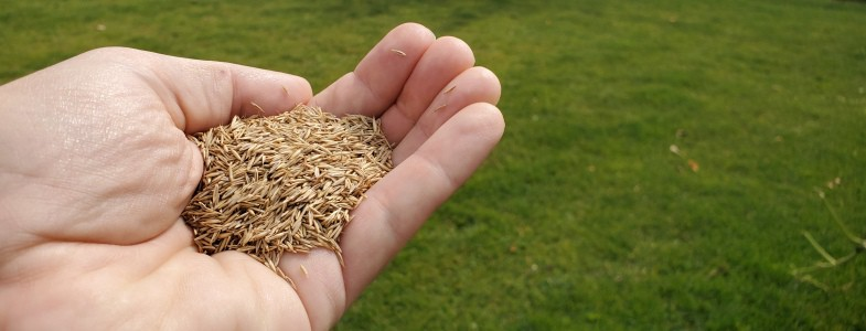 How Much Grass Seed Per 1000 Square Feet