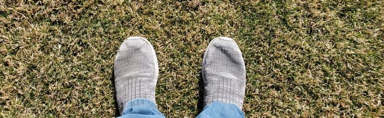 Why Your Lawn Is Soft Squishy and Spongy
