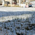 Guide to Lawn Care and Snow Management In Winter
